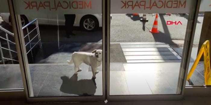 Dog Waited 6 Days Outside Hospital For Owner Undergoing Treatment to Come Back